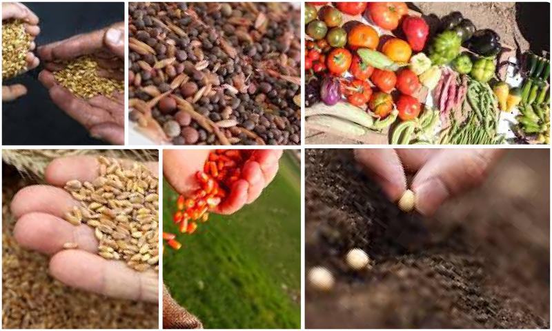 Yerli Tohumların Özellikleri Nelerdir?