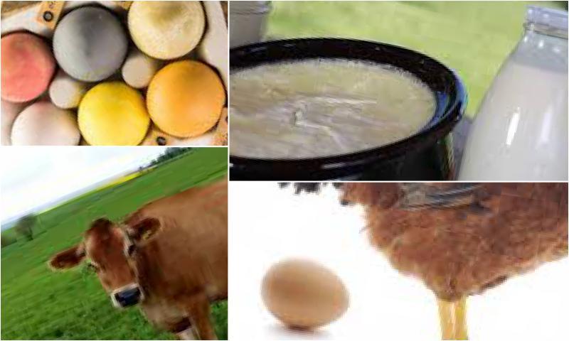 Tam Kıvamında Doğal Süt Ürünleri