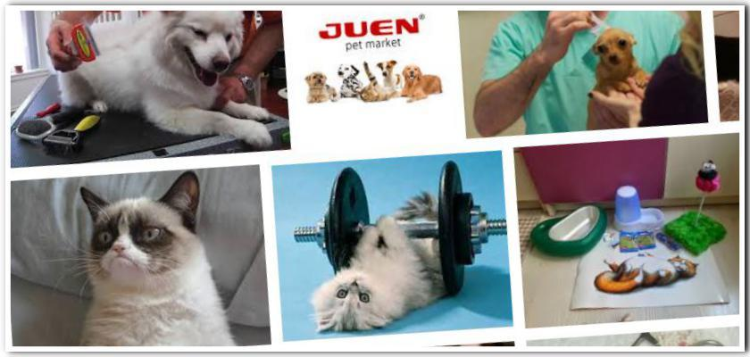 Evcil Hayvanları Pire ve Kenelerden Nasıl Koruruz?